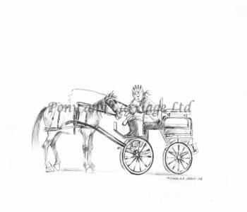 have carriage driving lessons