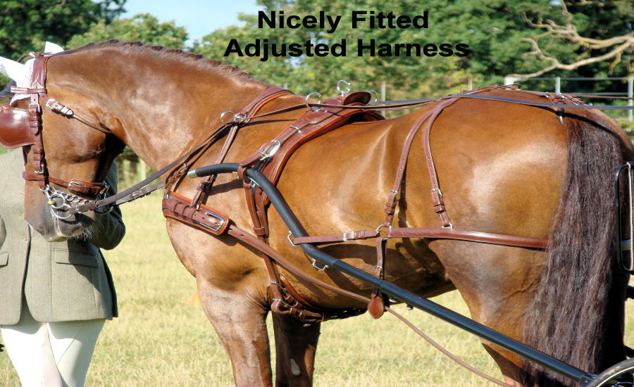 Well Fitted Sized Horse Harness