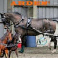 Arden Synthetic carriage drivng harness