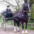 Leather Carriage driving harness value range